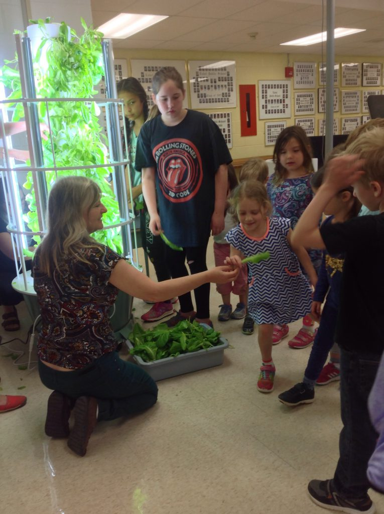 Greenhouse harvest in classroom
