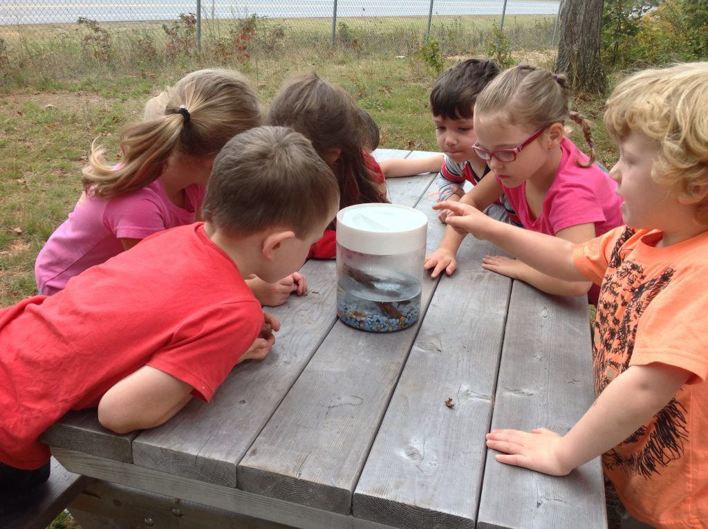 Students learning about ecosystems